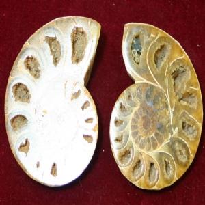 <P>Medium Polished Ammonite Pair (6cm x 4cm each).</P>