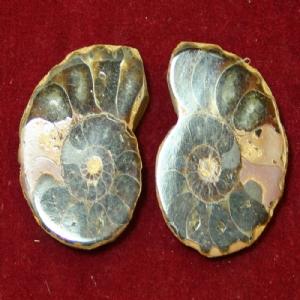 Small Polished Ammonite Pair (4cm x 3cm).